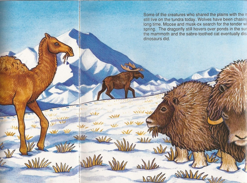 Thunderfeet Bering camel musk ox