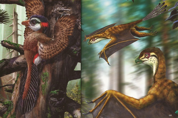 Scansoriopteryx and Yi qi