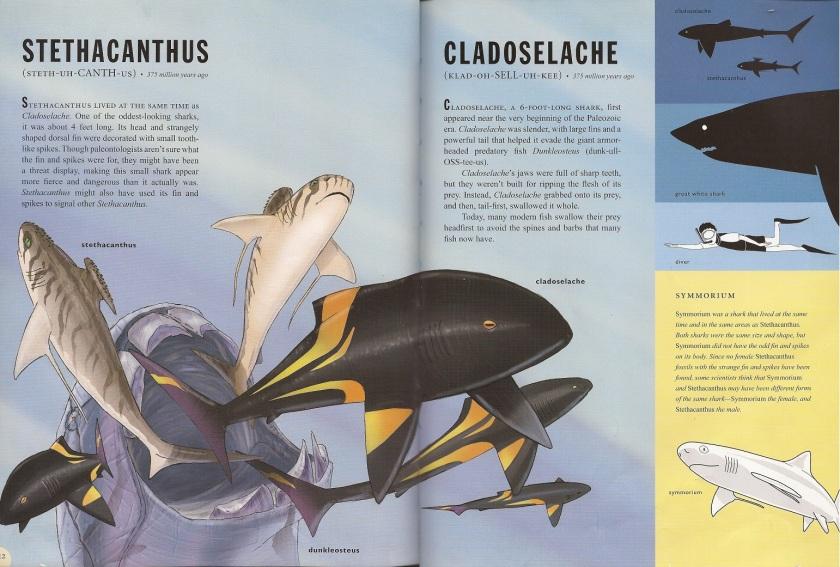 PaleoSharks Stethacanthus & Cladoselache
