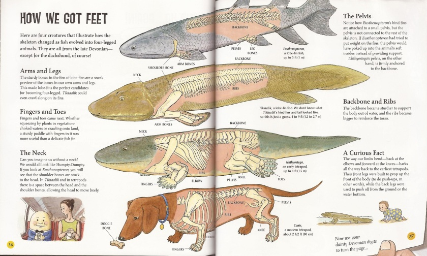 When Fish Got Feet tetrapods