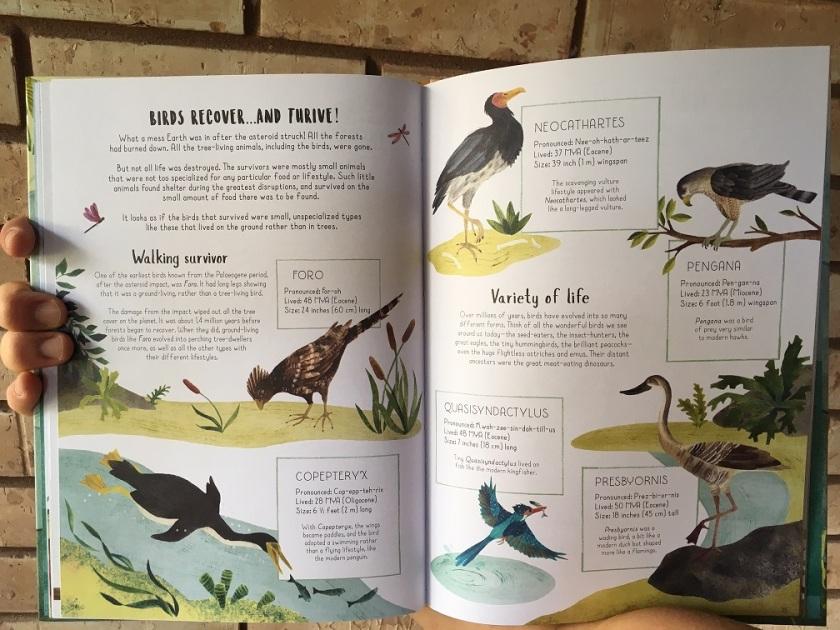 cenezoic birds