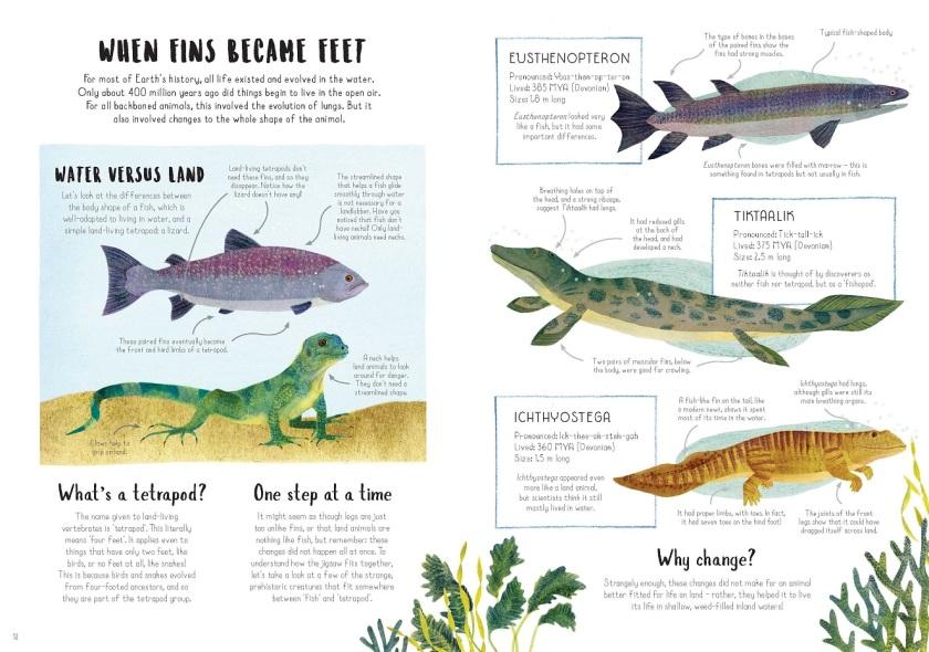 fish to tetrapods