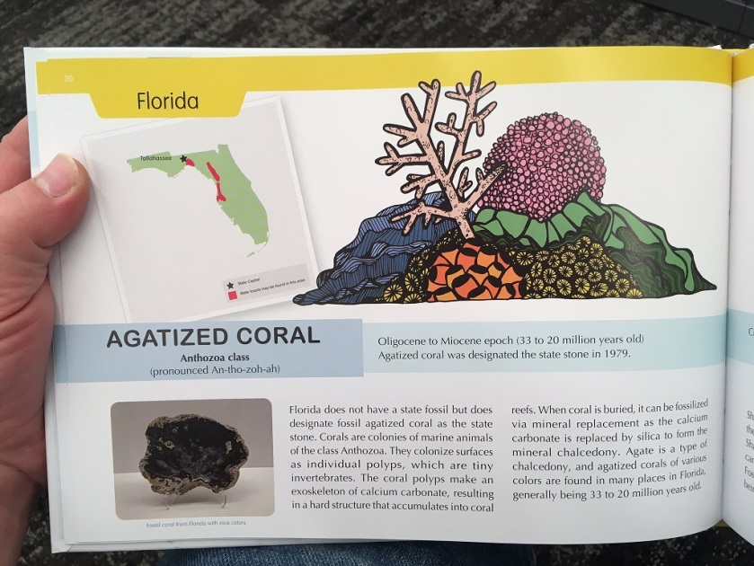 Florida Agatized Coral