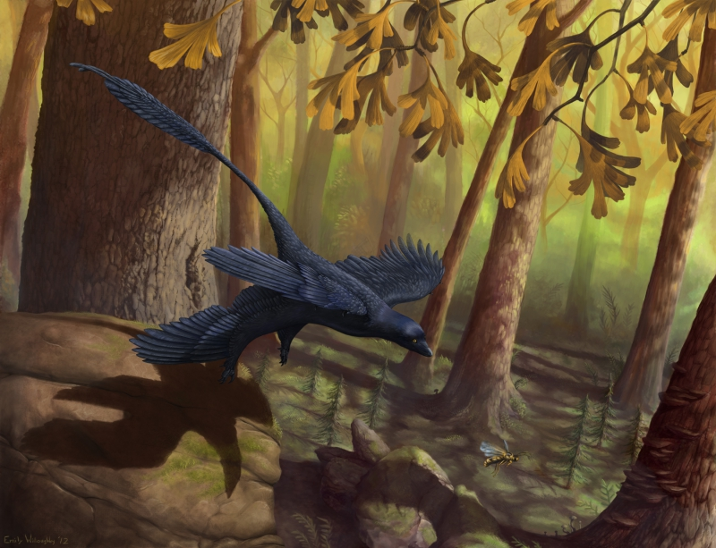 microraptor-takeoff