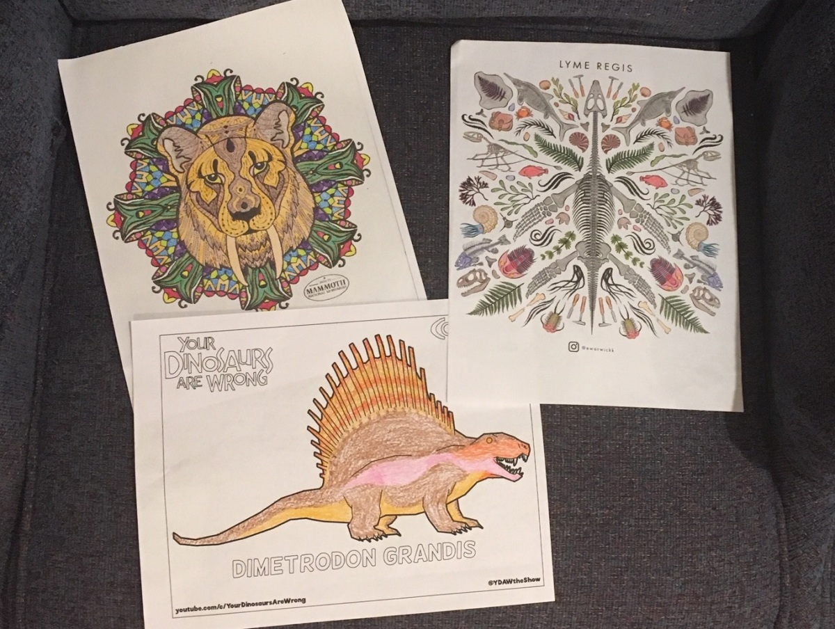 Spotted Dinosaur Coloring Page : Printables For Kids €� Free Word ... | 905x1200