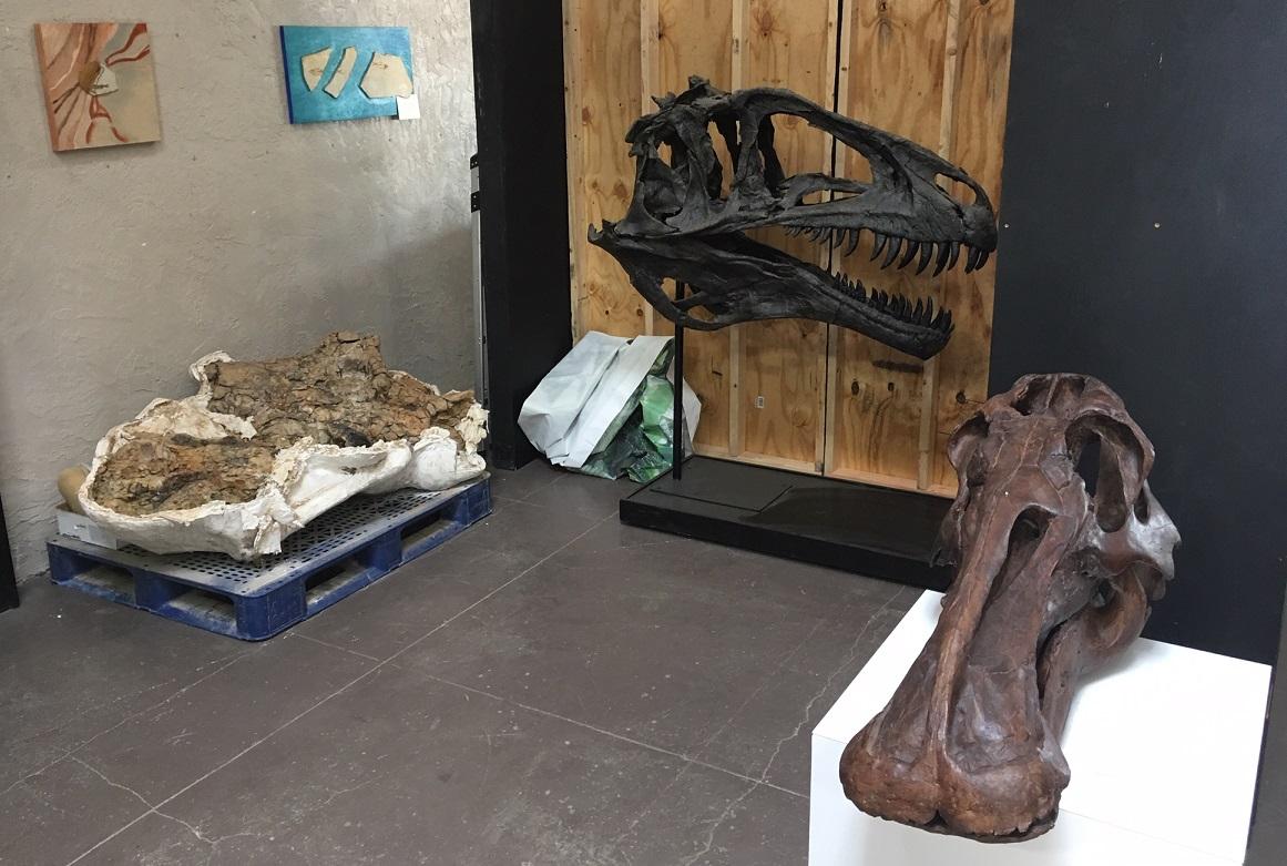 Cretaceous skulls