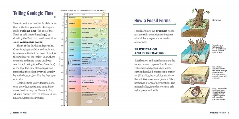 fossils for kids how fossils form